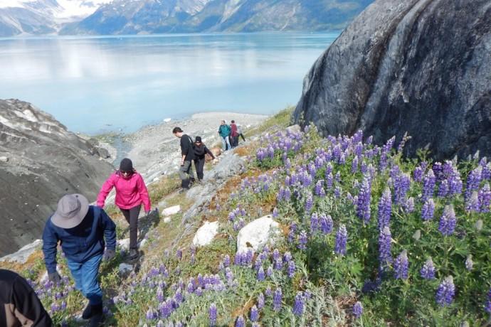 cruise-glacier-bay-with-uncruise-adventures