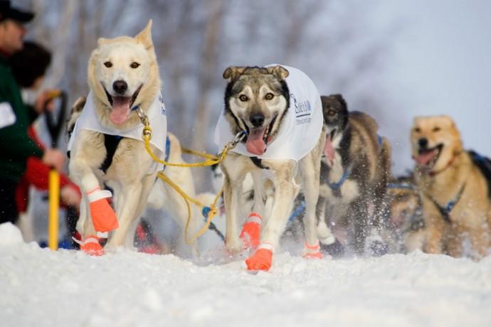the-iditarod-alaska-photo-treks