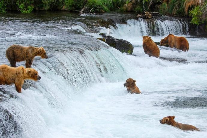 Bears-at-Brooks-Falls-Flickr-Scott-Michaels