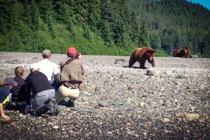 explore-the-pack-creek-bear-sanctuary-pack-creek-bear-tours