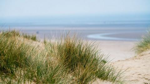 Beach rye grass life in the intertidal Danielle Brigida Flickr 40543785125 7a22e50966 c