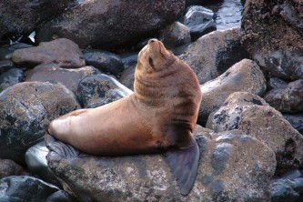 Alaska Kim Raum Suryan 2 noaa fisheries
