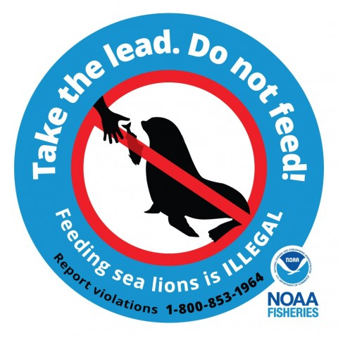 Feeding sea lions is illegal—and for a good reason. Take the lead, do not feed!
