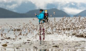 Kristin Carpenter 20180505 Banks Hartney Bay shorebirds alaska best wildlife viewing spots in cordova