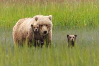 Alaska Bear Viewing Tours Pattie Walsh DX 4504
