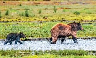 Alaska Bear Viewing Tours