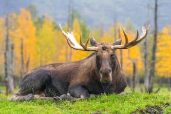 Alaska-Zoos-Wildlife-Parks-Aquariums-AWCC 26362019 200629 141753