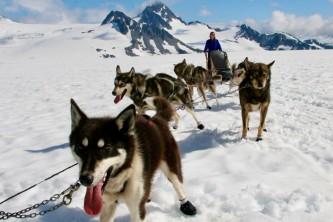 Alaska Dog Sledding Tours Jeannine Audet IMG 9123