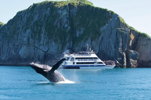 Day cruises like those with Major Marine Tours are a great way to see marine wildlife