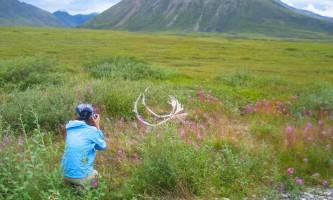 Trip ideas arctic circle 28 Jul 07 057 from NATC website Northern AK Tour Co