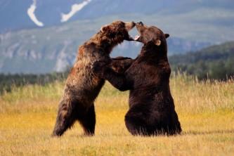 Homer bear viewing lodges