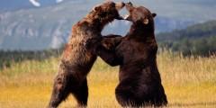 Homer Alaska Bear Adventures Thumb Alaska Bear Adventures with K Bay
