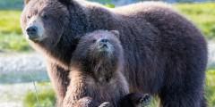 Juneau bear viewing tours bobkamino