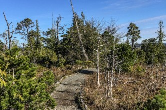 Ketchikan guided hiking CGB Muskeg Trail