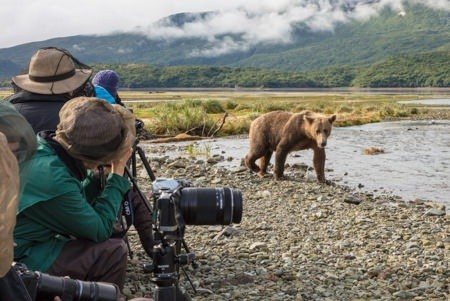 Experience Alaska Bear Viewing tours on beautiful Kodiak Island