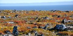 Nome Nome Bering Sea Robin Johnson Robin Johnson Inlines for Nome 2