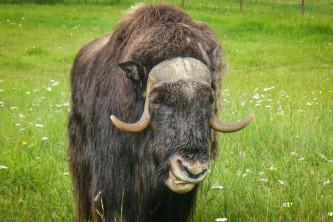 Palmer wasilla wildlife parks Alaska Channel