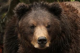 Things to do in sitkafortress of the bears barbara greninger Barbara Greninger