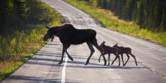 Tok alaska akphotograph com