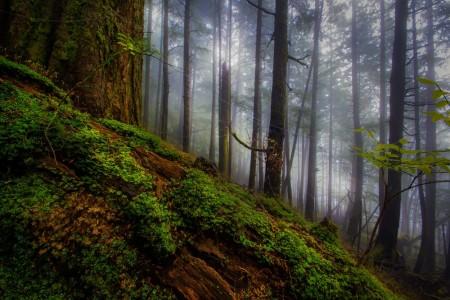 Ketchikan tongas national forest Tongass Rain Forest ketchikan carols rojas Carlos Rojas