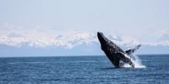 Alaska trip ideas whittier prince william sound humpback kyle lutz Kyle Lutz whittier