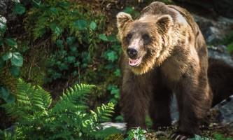 Bears Wolverine Creek 14 mxexrp