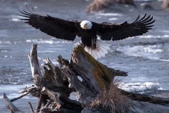 Birding Locations turnagain arm dennis mc afee potters marsh pa9sxd