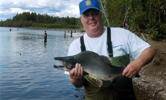 Alaska species fish pink salmon