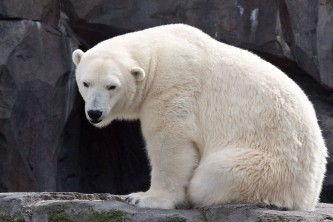 Alaska species land mammalsmay10 0210