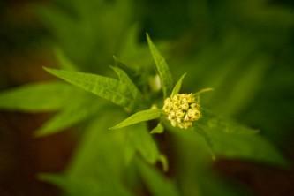 Alaska species plants flowers Botanical Gardens 0079 Alaska Channel