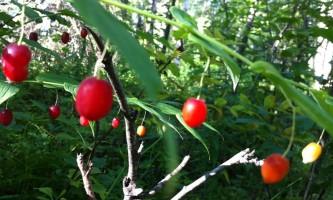Alaska species plants flowers 0665a915 e355 405b bc0a 57c63913f371