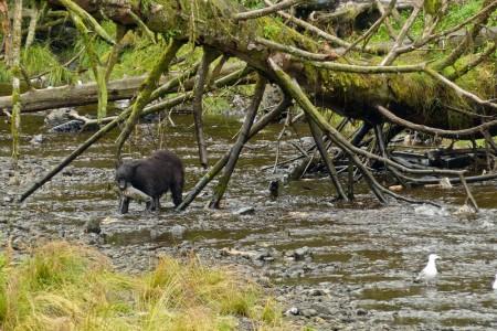 The Best Wildlife Viewing Spots in Kake