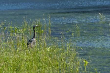 The Best Wildlife Viewing Spots in Pelican