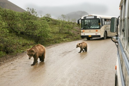 The Best Wildlife Viewing Spots in Denali National Park