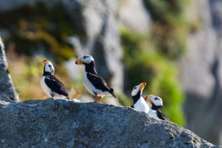 Birding Locations in Unalaska