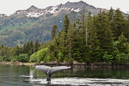 The Best Wildlife Viewing Spots in Prince William Sound