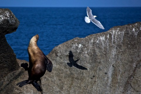 Board a day cruise to see sea lions in their natural habitat