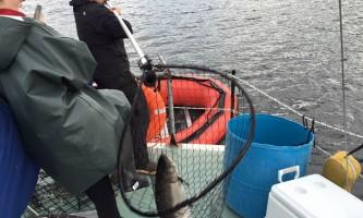 Alaska_Adventure_Sailing-11220055_10207238752989895_7697178002831195375_n-nzq7tq