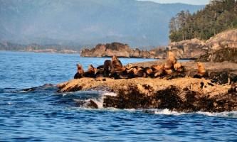 Alaska_Adventure_Sailing-DCH_6151os-nzq7s4
