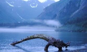 Alpenglow-charters-Thumb_s_Cove_creature-p8hnca