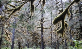 Alpenglow-charters-Thumb_s_Cove_trees_Aug_2010-p8hncd