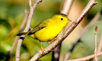 Bird_Species-05-mknlzi