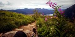 Mount Roberts Alpine Loop Trail