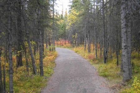 Roadside Trail