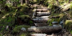Sealion Cove Trail