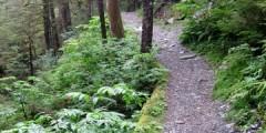 Spaulding Meadows Trail
