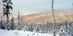 Stiles Creek Trail
