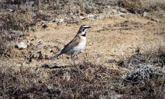 Bird_Species-03-mryhry