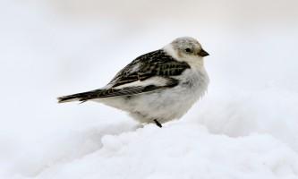 Bird_Species-14-mryhv0