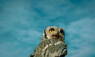 Bird_Species-18-mryhvr